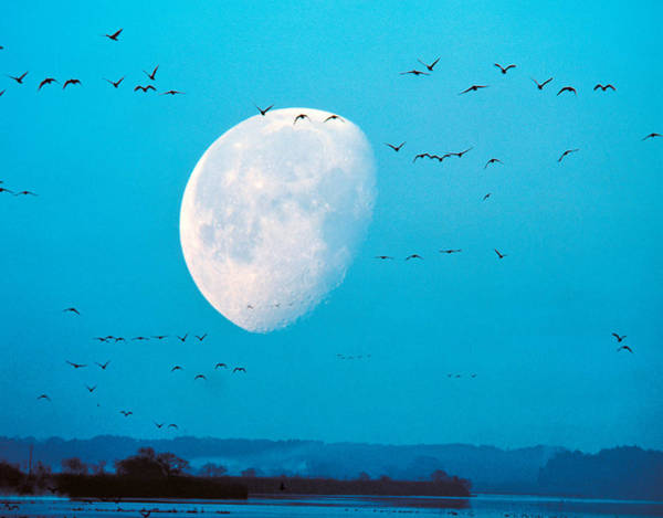 Migrate Photograph - Migrating Birds In Blue Sky With Half by Panoramic Images