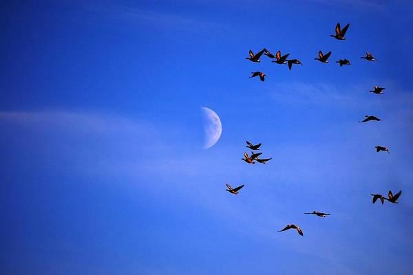 Photograph - Migration by Gavin Macrae