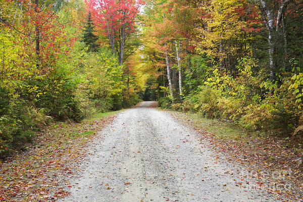 Photograph - Milan Hill State Park - Milan New Hampshire Usa by Erin Paul Donovan