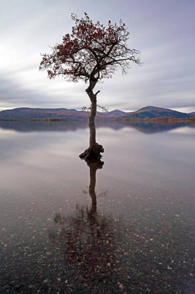 Photograph - Milarrochy Bay Tree by Grant Glendinning