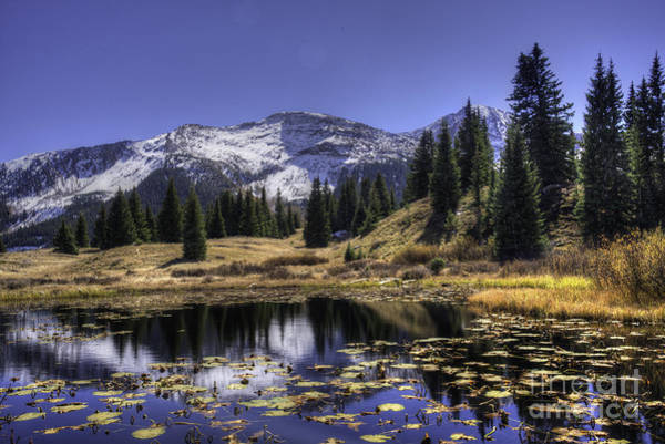 Photograph - Mile High Lily Pads by David Waldrop