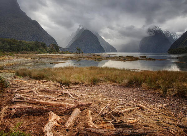 Photograph - Milford Sound by Kim Andelkovic