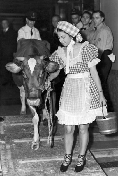 Wall Art - Photograph - Milking Cow In New York Hotel by Underwood Archives