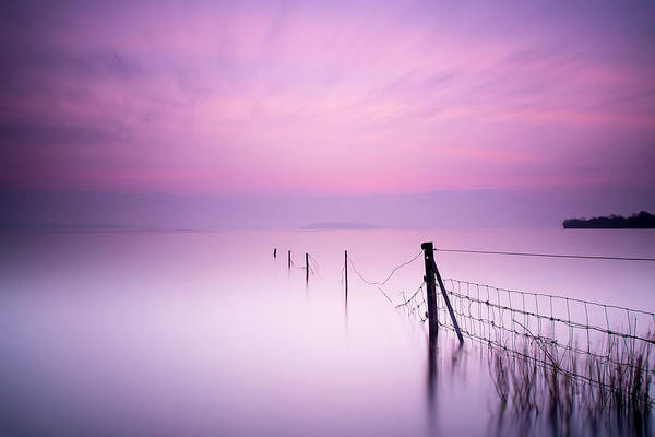 Colours Photograph - Milky Pink by Kieran O Mahony