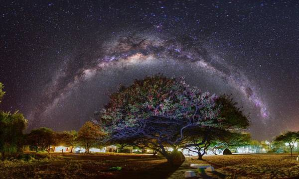 Campsite Wall Art - Photograph - Milky Way Over An Acacia Tree by Juan Carlos Casado (starryearth.com) / Science Photo Library
