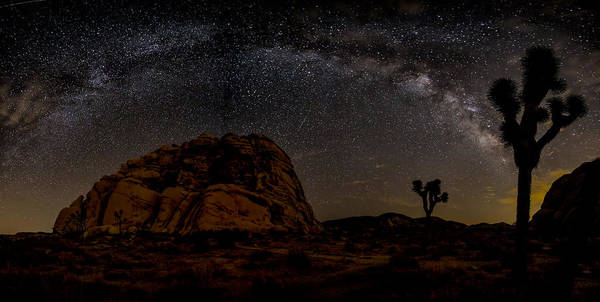Desert Plant Photograph - Milky Way Over Joshua Tree by Peter Tellone
