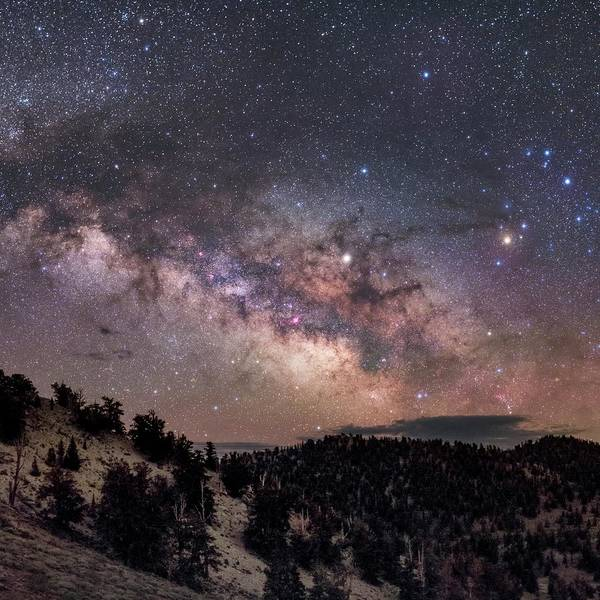 Wall Art - Photograph - Milky Way Over Pine Trees by Babak Tafreshi/science Photo Library