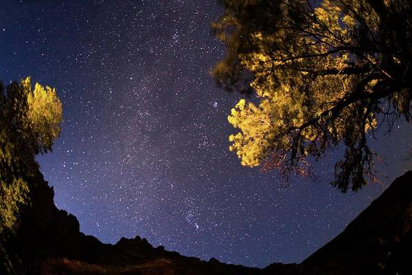 Astronomical Twilight Photograph - Milky Way Over Trees by Babak Tafreshi/science Photo Library