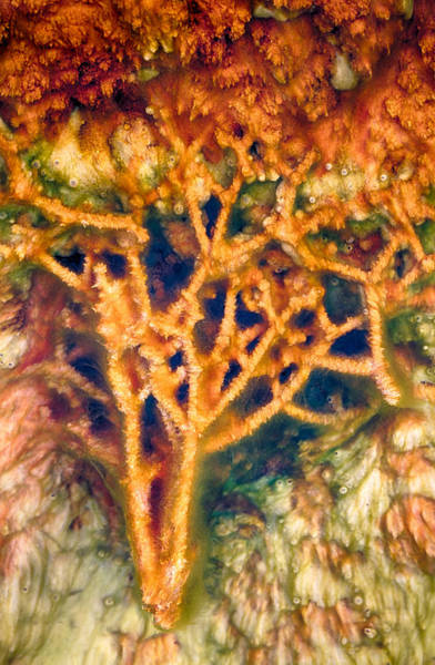 Photograph - Mineral Branches Hot Springs by Scott Campbell