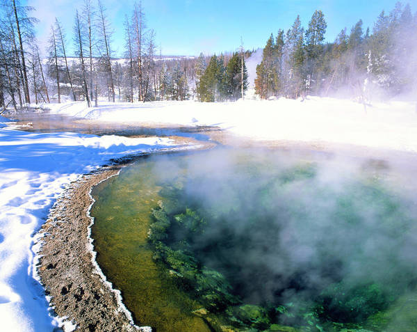 Morning Glory Photograph - Minerals And Algae In Hot Spring In Winter by Simon Fraser/science Photo Library