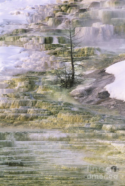 Photograph - Minerva Springs Terraces Yellowstone National Park by Dave Welling