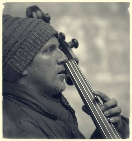 Photograph - Mingus Band Bassist by Alice Gipson