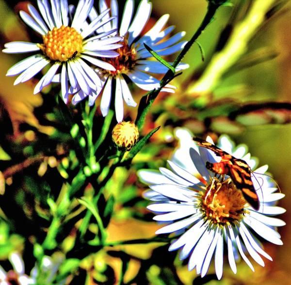 Photograph - Mini Nature by Tyson Kinnison