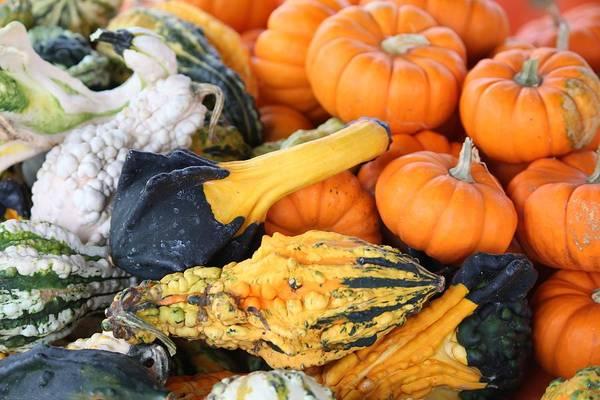 Photograph - Mini Pumpkins And Gourds by Cynthia Guinn