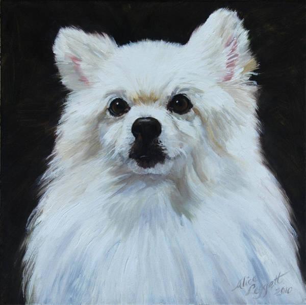 Service Dog Painting - Miniature American Eskimo Dog by Alice Leggett