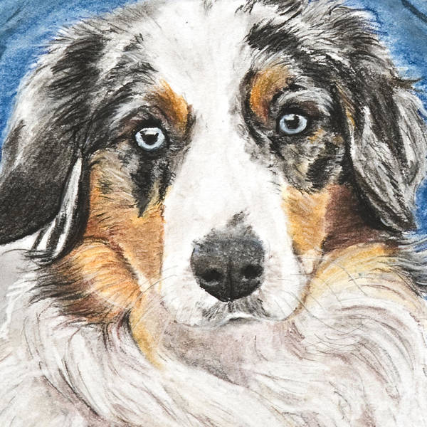 Art Print featuring the painting Miniature Australian Shepherd by Kate Sumners