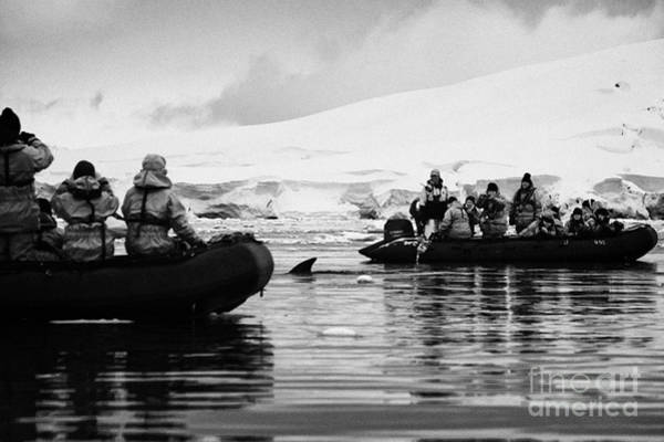 Encounter Bay Photograph - Minke Whale Swims Between Passengers On Board Zodiacs On Excursion In Antarctica by Joe Fox