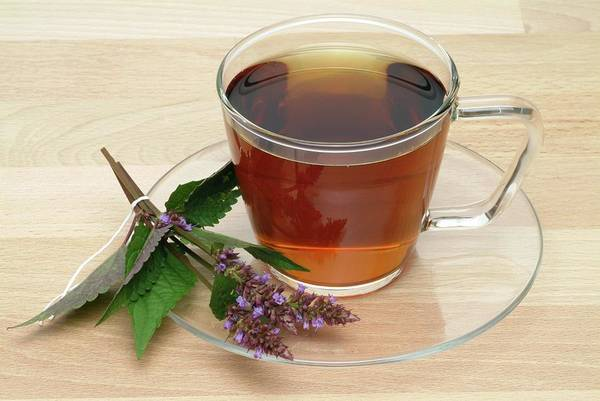 Traditional Chinese Medicine Wall Art - Photograph - Mint Hyssop Herbal Tea by Bildagentur-online/th Foto/science Photo Library