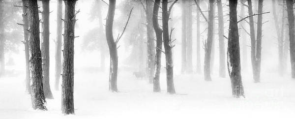 Trees In Fog Photograph - Minus Five by Janet Burdon