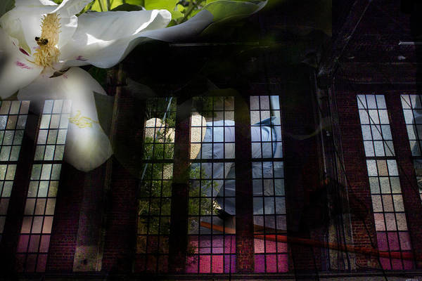 Photograph - Miracles On The High Line by Evie Carrier