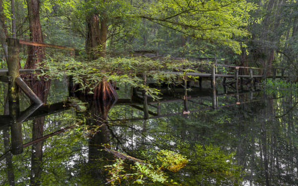 Cypress Knees Photograph - Mirror To The Soul by Debra and Dave Vanderlaan