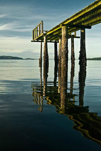 Photograph - Mirrored Algae Pier by Jani Freimann