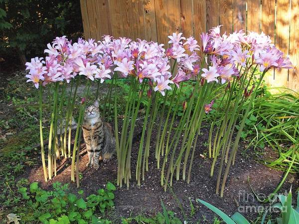 Surprise Lily Photograph - Miss Feather In Lilies by Nancy Kane Chapman