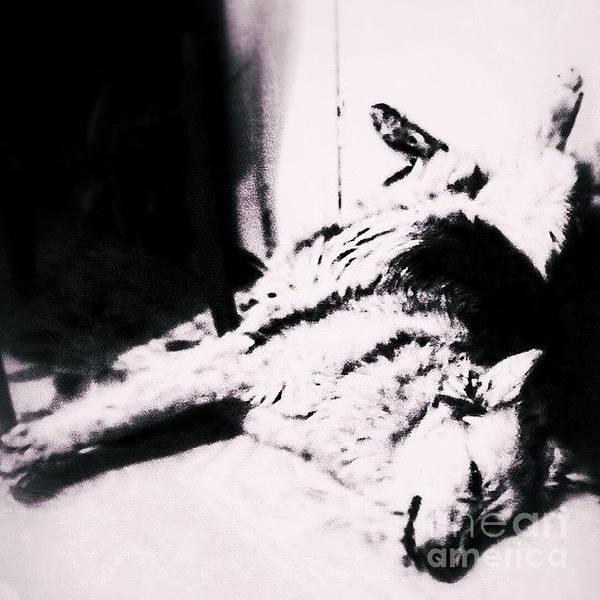 Dogs Wall Art - Photograph - Miss Hannah.  #gsd #germanshepherd by Abbie Shores
