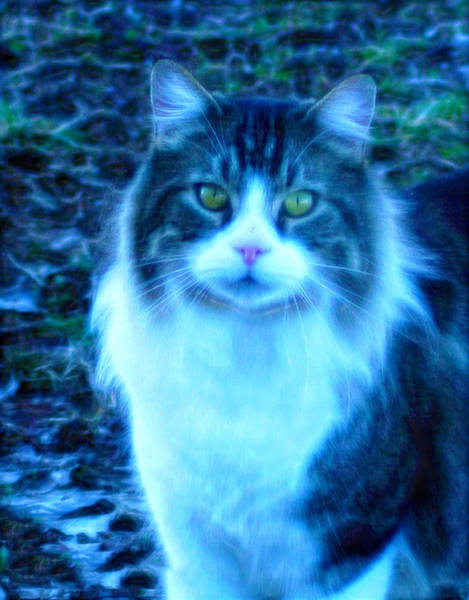 Photograph - Miss Kitty Art II by Lesa Fine