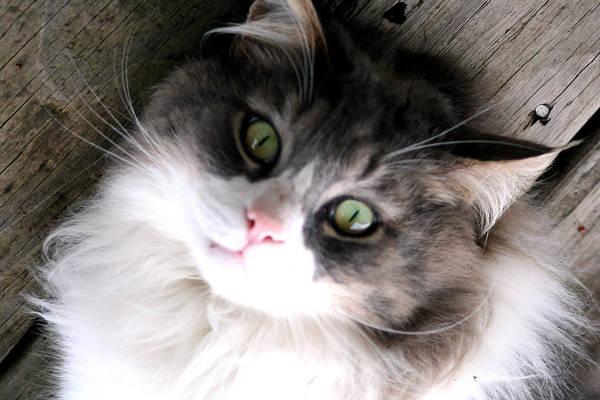 Photograph - Miss Kitty Portrait by Lesa Fine