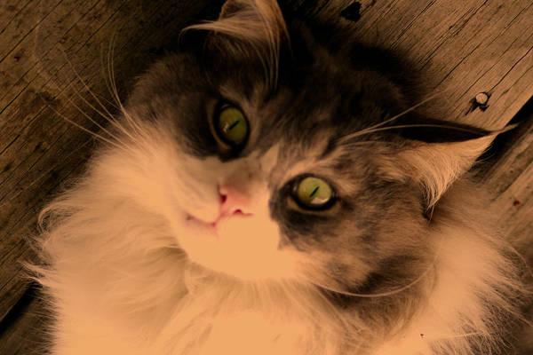 Photograph - Miss Kitty Portrait Sepia  by Lesa Fine