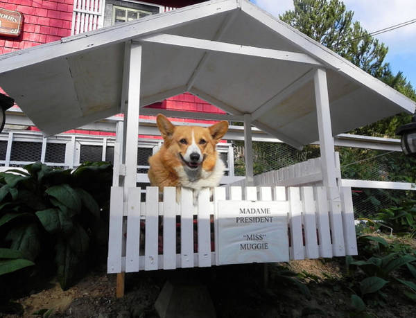 Greeters Photograph - Miss Muggie by Cheryl Hoyle
