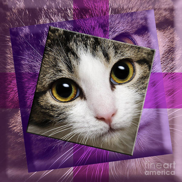 Photograph - Miss Tilly The Gift 4 by Andee Design