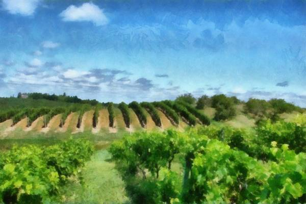 Wall Art - Photograph - Mission Peninsula Vineyard Ll by Michelle Calkins