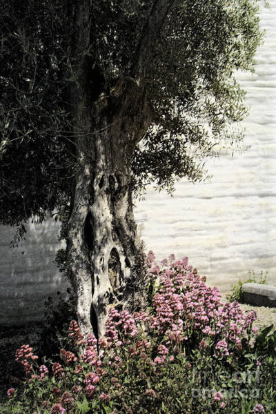 Photograph - Mission San Jose Tree Dedicated To The Ohlones by Ellen Cotton