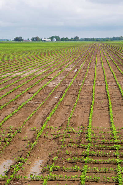 Row Crops Photograph - Mississippi Delta Farmland by Jim West