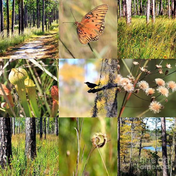 Photograph - Mississippi Woods Collage by Carol Groenen