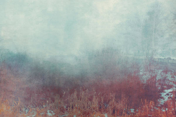 Wall Art - Photograph - Mist 548 by Violet Gray
