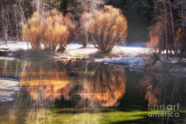 Photograph - Mist And Reflections by Anthony Bonafede