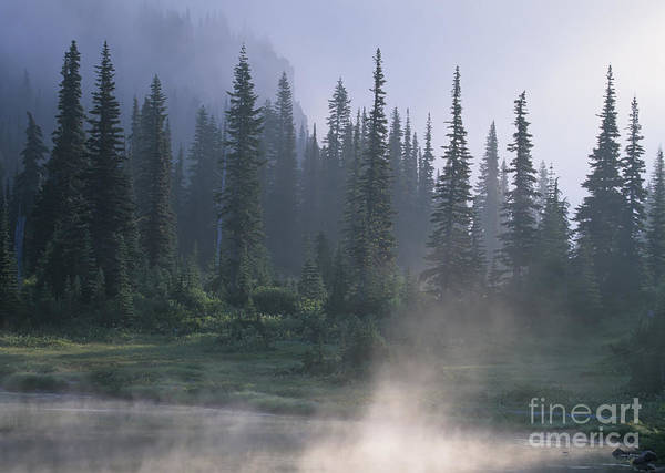 Photograph - Mist And Trees by Chris Scroggins