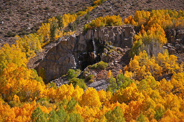 Photograph - Mist Falls And Aspen In Autumn by Steve Wolfe