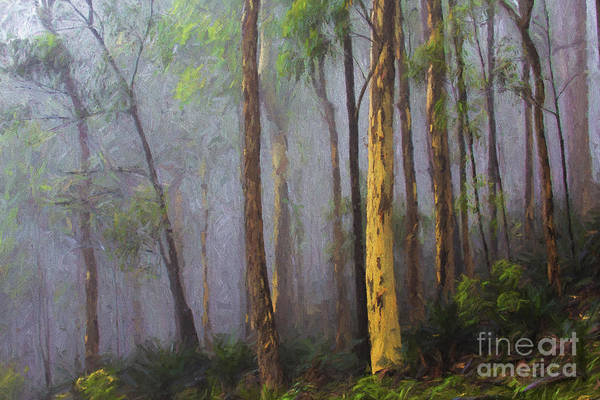 Wall Art - Photograph - Mist In Forest by Sheila Smart Fine Art Photography