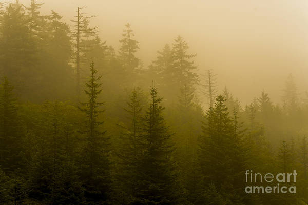 Photograph - Mist In The Pine Trees by Thomas R Fletcher