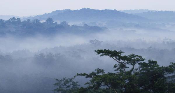 Equatorial Africa Wall Art - Photograph - Mist Over Tropical Rainforest Kibale Np by Sebastian Kennerknecht