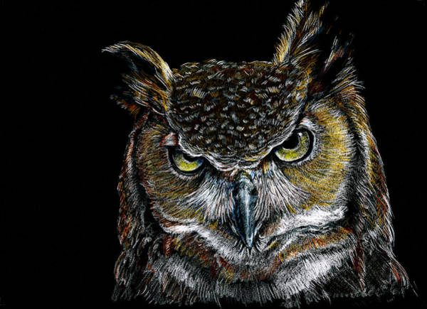Drawing - Mister Owl by William Underwood