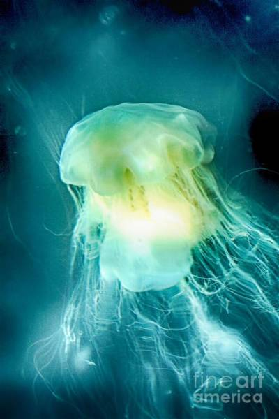 Photograph - Mystery Underwater by Karla Weber