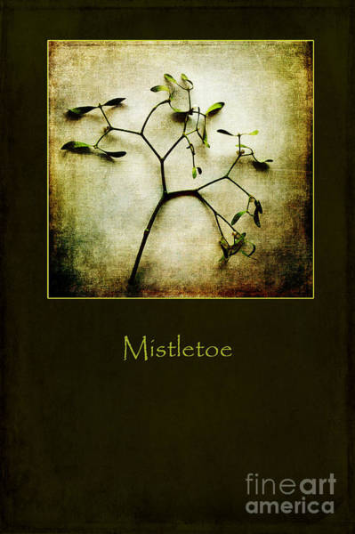 Photograph - Mistletoe by Randi Grace Nilsberg