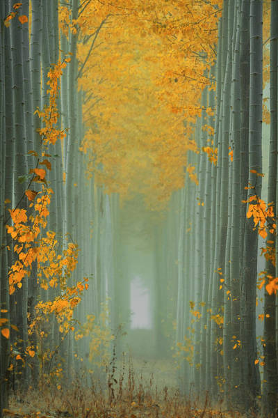 Misty Photograph - Misty Autumn Path by Lydia Jacobs
