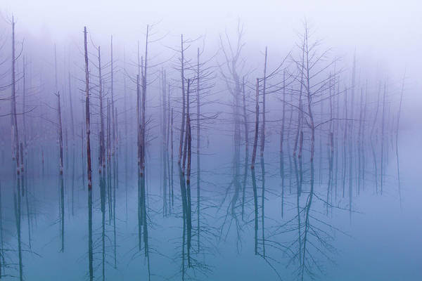 Wall Art - Photograph - Misty Blue Pond by Osamu Asami