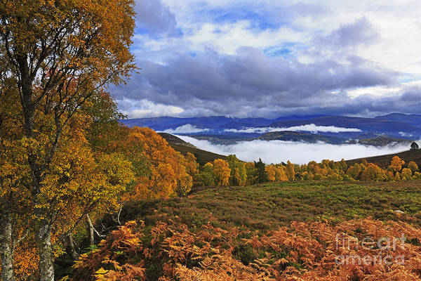 Wall Art - Photograph - Misty Day In The Cairngorms II by Louise Heusinkveld